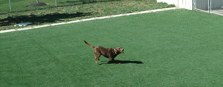 Lite and Classic K9Grass - K9Grass is specifically designed for the needs of pets and their owners