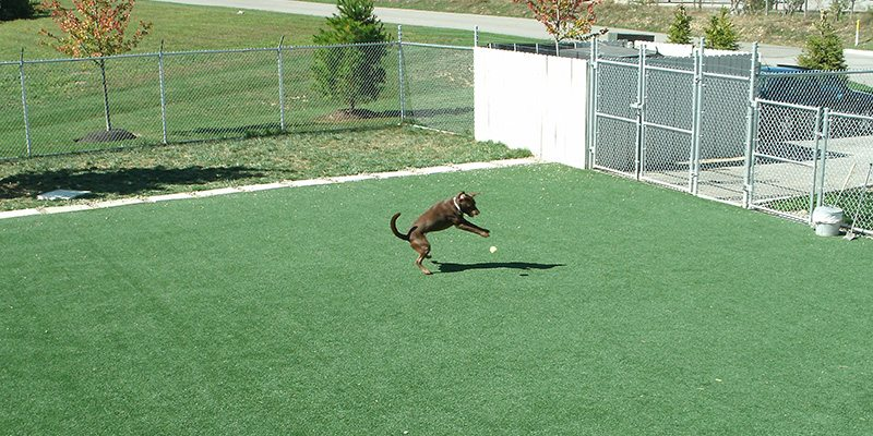 K9Grass Artificial Turf installed at the Pet Palace project in Hilliard, Ohio